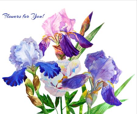 Blue irises. Watercolor flowers Stock Photo