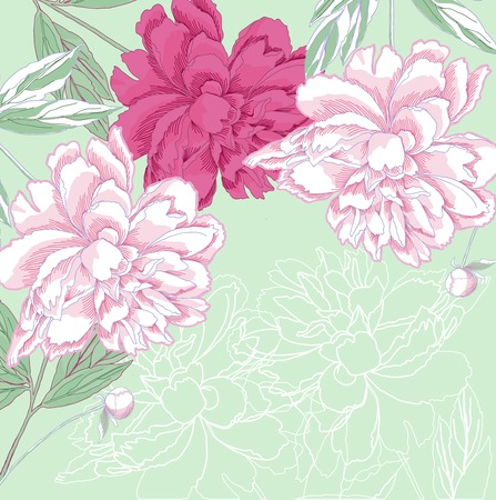 Background with white and pink peony Ilustração