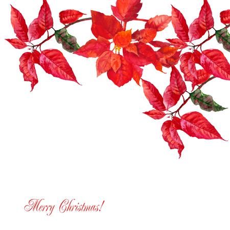 Background with red poinsettia Illusztráció