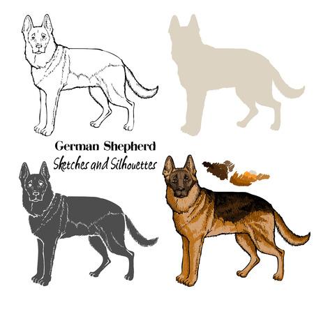 German Shepherd dogs sketches