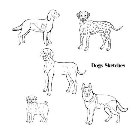 Hand drawn dogs sketches