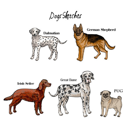 Hand drawn dogs sketches. Dalmatian, German shepherd, Great Dane, Irish setter and pug. Vector illustration Çizim