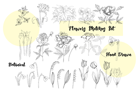 Flowers Sketches. Hand drawn botanical elements