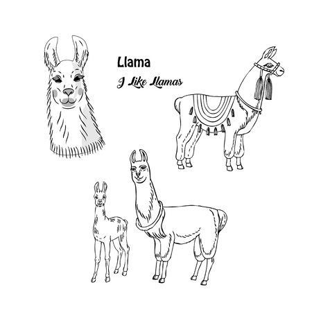 Llamas animals set. Hand drawn sketches. Vector Illustration Ilustração