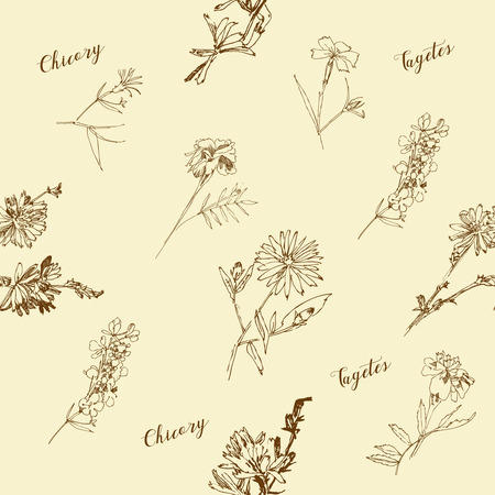 Seamless pattern with Wild Flowers with Summer Botanical Sketches Zdjęcie Seryjne - 123363415