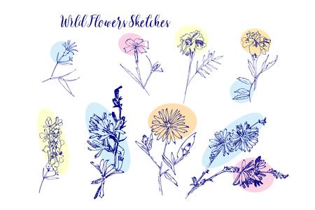 Wild Flowers Sketches. Hand Drawn Digital  Illustration