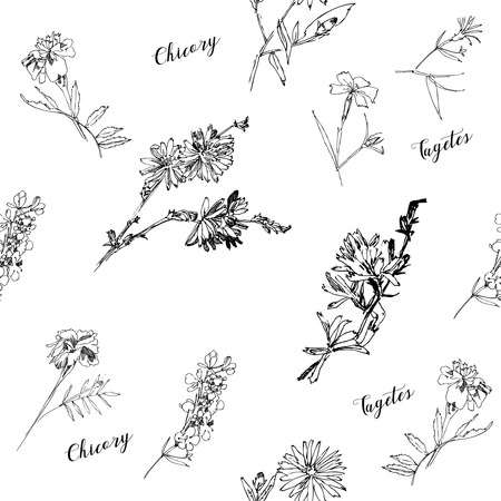 Seamless pattern with Wild Flowers with Summer Botanical Sketches Ilustracja