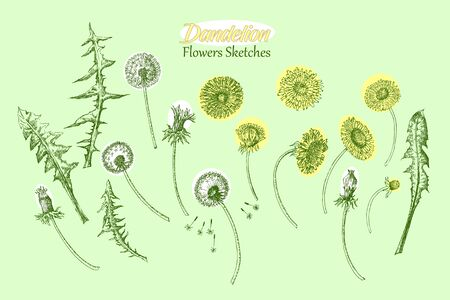 Dandelions Wild Flowers Sketches. Hand Drawn Stock Illustratie