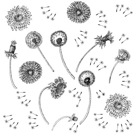 Dandelions Flowers Seamless Pattern.  Hand drawn sketches. Imagens - 132359346