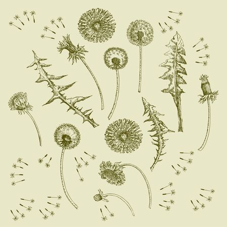 Dandelions Flowers Seamless Pattern.  Hand drawn sketches