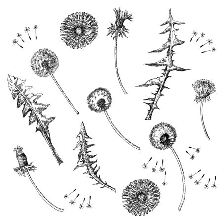 Dandelions Flowers Seamless Pattern.  Hand drawn sketches. Stock Illustratie