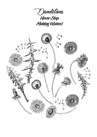 Dandelions Poster Wild Flowers Sketches. Hand Drawn Illustration