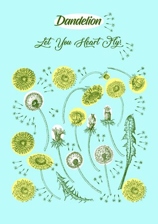Dandelions Poster Wild Flowers Sketches. Hand Drawn Digital  Illustration