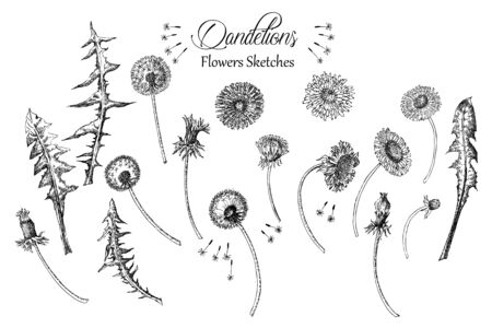 Dandelions Background with  Wild Flowers Sketches. Ilustração