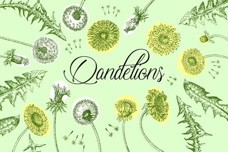 Dandelions  Background with Wild Flowers Sketches.