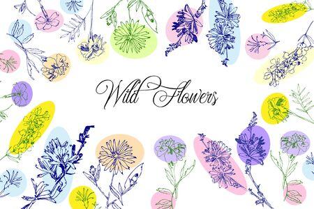 Wild Flowers Sketches  Background. Hand Drawn Botanical Digital  Illustration
