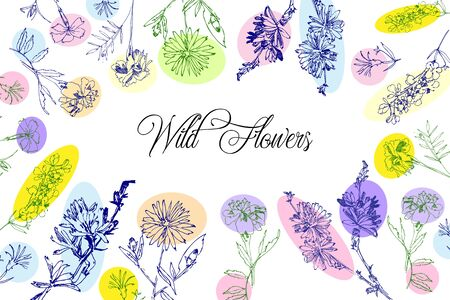 Wild Flowers Sketches  Background. Hand Drawn Botanical Digital  Illustration