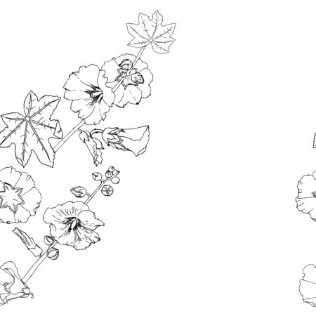Malva seamless pattern Summer Flowers Sketches. Hand Drawn Digital Illustration Imagens - 136291042