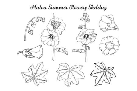 Malva Summer Flowers Sketches. Hand Drawn Illustration
