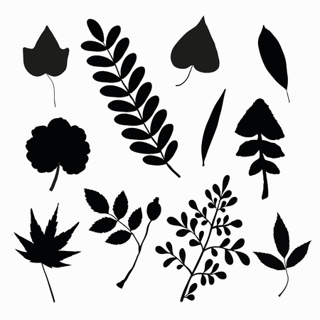 Set of black  leaves silhouettes Vector