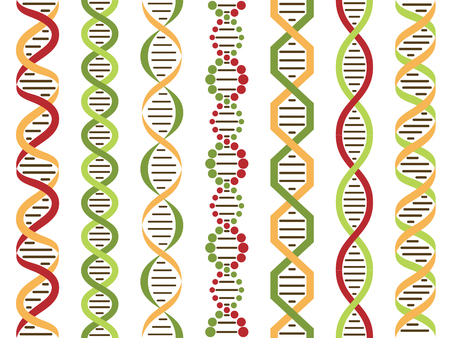 DNA set, colorful seamless DNA lines Vector illustratiion Ilustração