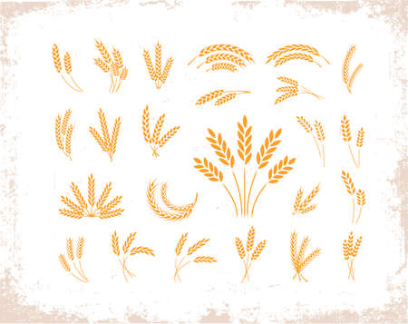 Set of wheat ears object and design elements for beer, organic local farm fresh food, bakery themed design Иллюстрация