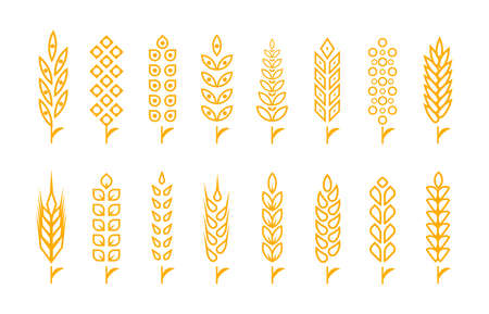 Set of wheat ears object and design elements for beer, organic local farm fresh food, bakery themed design