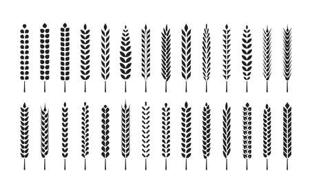 Set of wheat ears icons and design elements for beer, organic local farm fresh food