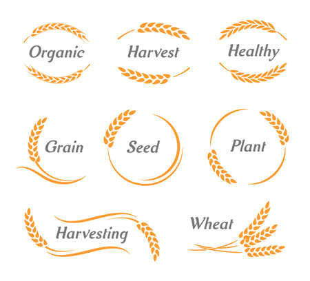 Set of wheat logo with the place for text, Ears of Wheat