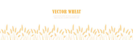 Ears of wheat in field horizontal border seamless pattern with the place for text