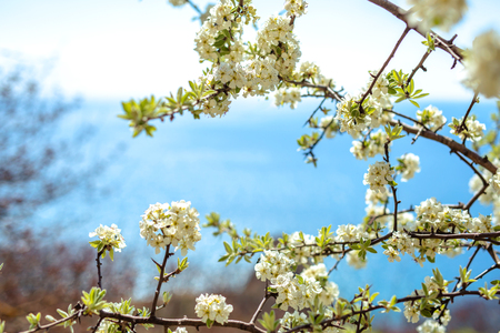 Branch of blooming tree against the background of blurred sea landscape
