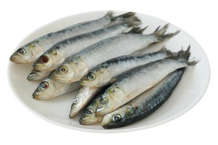 sardinas: Sardinas frescas sobre una placa Foto de archivo
