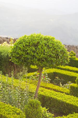 mediaval: garden in village Marvao, Portugal