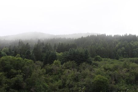 Foggy Mountain Treetops