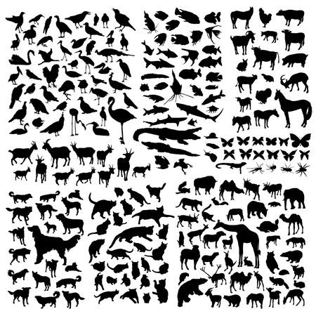 dog shark: Big animals silhouettes set