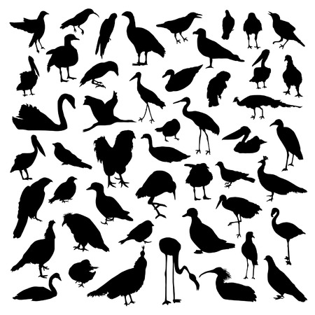 pigeon owl: Birds set