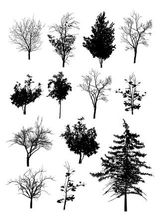 arboles secos: Árboles del vector en siluetas