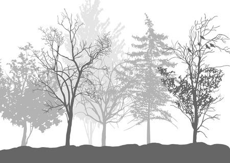 arboles secos: Siluetas de árboles en el bosque
