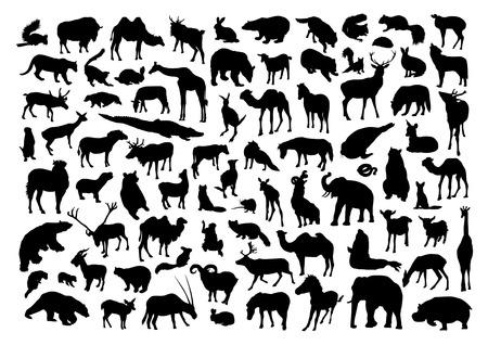 zwierzeta: Zestaw dzikich zwierząt Ilustracja