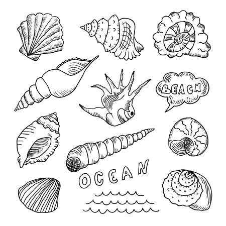 Set of hand drawn sea shells Ilustração