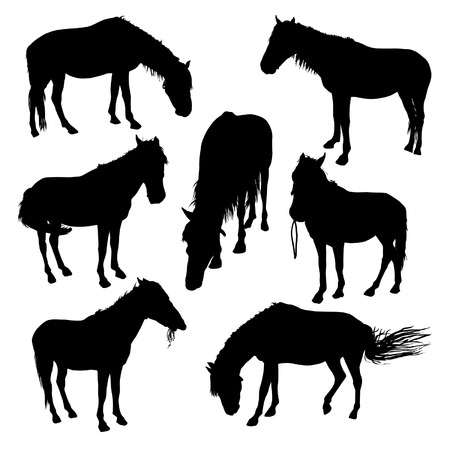 horse riding: Horses silhouettes set Illustration