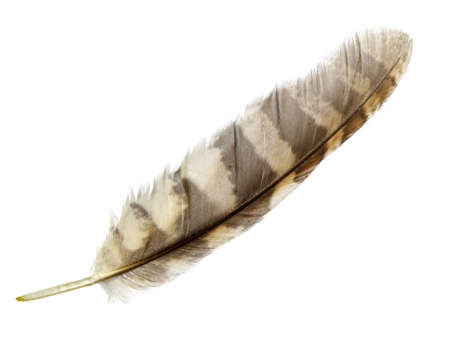 feather isolated on white photo