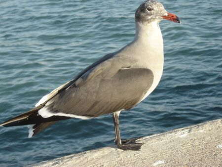 seagul Stockfoto