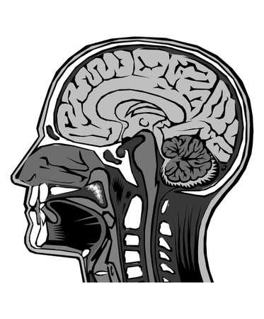 Menselijk hoofd