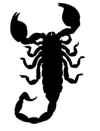 Escorpión silueta  Foto de archivo - 550651