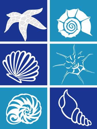 Marine life photo