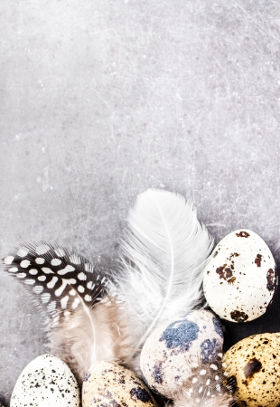 Heap of Quail eggs with feathers on vintage grey scratched textured  background with copy space for text. Easter decorations on gray and white board, closeup. Banco de Imagens