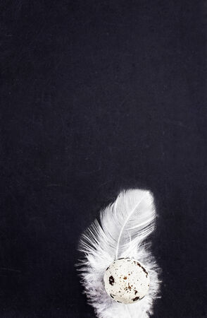 white feather: Blank blackboard with white feather and copy space for text, close up. Stock Photo
