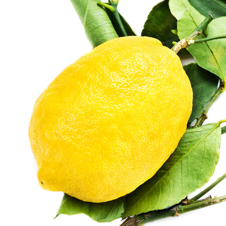 Lemon with green leaves isolated on white background close up. Lemons tree with white background macro. photo