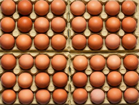 duck egg: Egg, Chicken Eggs as background.
